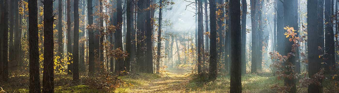 Skog utfallande